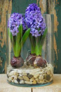 deco flor jacinto