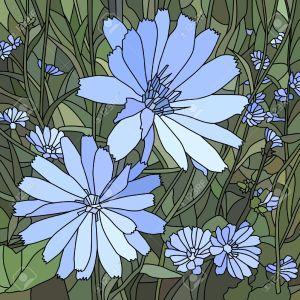 dibujos flores achicoria