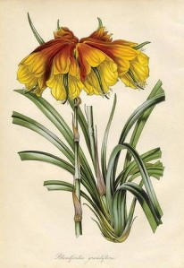 dibujos plantas bellos 1