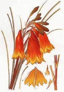 dibujos plantas bellos 2