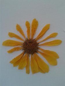 Flor de tupinambo