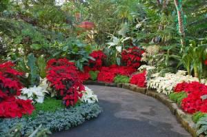 Botanical garden during the christmas season