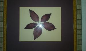 flor pascua seca cuadro