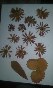 flor seca crisantemos