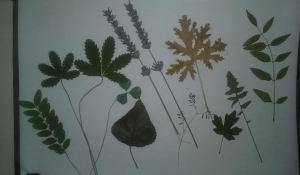 flor seca galerái 2 varias