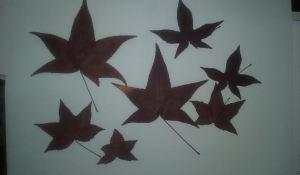 flor seca galería 2 arce