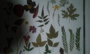 flor seca galería 2 varaias