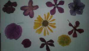 flor seca galería 2 varias bis