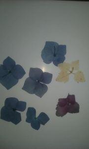 flor seca galería 2