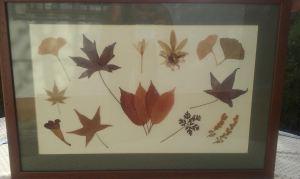 flor seca hojas