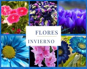 flores-invierno