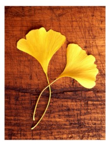 ginkgho simple