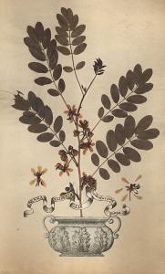 herbario 3
