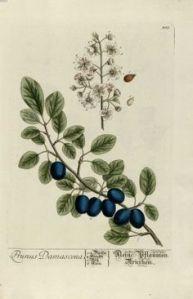 herbario 4