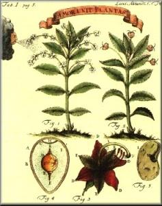 herbario linneo