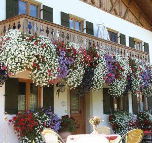 jardineras balcón petunias