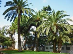 jardines victoria palmeras canarias