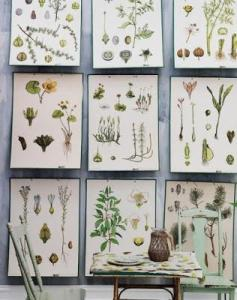láminas botánicas 3