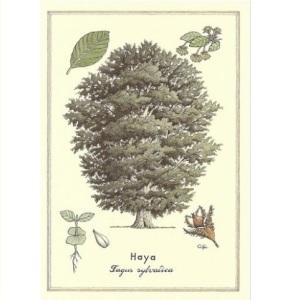 láminas botánicas 4