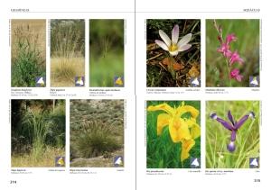 láminas botánicas 5