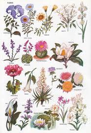 láminas plantas 3