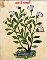 libro códice planta