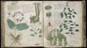 libro misterioso de plantas