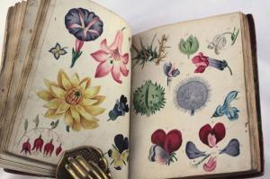 libro plantas antiguo