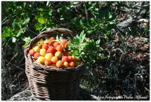 madroños cesta
