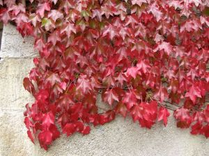 marcapáginas hojas