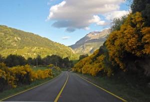 retamas patagonia 3