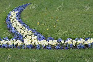 16623841-Las-flores-de-violetas-en-el-jard-n-de-Mirabel-Salzburgo-Austria-Foto-de-archivo