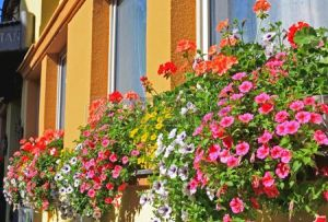 3763637-la-hermosa-decoracion-de-flores-en-la-ventana-de-san-wolfgang-en-lake-district-cerca-de-salzburgo-au