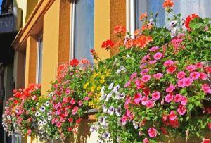 3763637-la-hermosa-decoracion-de-flores-en-la-ventana-de-san-wolfgang-en-lake-district-cerca-de-salzburgo-au