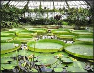 botánico bruxelles