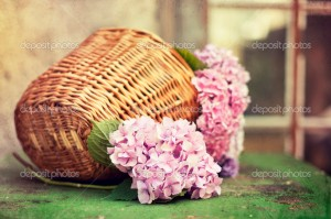 hydrangea in a wicker basket