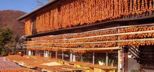 Drying-persimmons