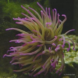 flores marinas 2