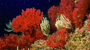 flores marinas 8