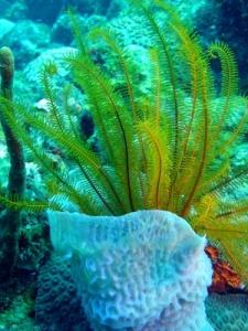jardin sous-marin à la dominique