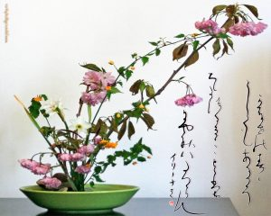 ikebana-sakura