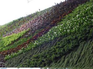 jardín vertical 3 dolce vita
