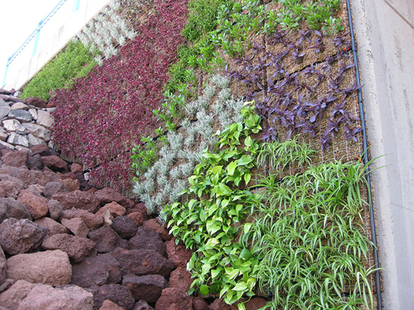 Jardines verticales creciendoentreflores for Plantas jardin vertical