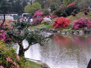 jardin-japones - copia