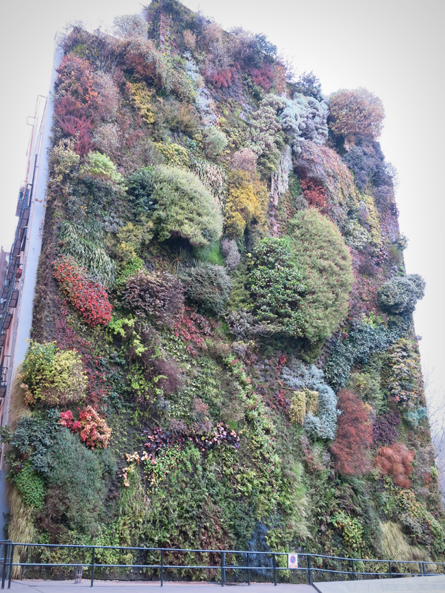 Jardines verticales creciendoentreflores for Jardin vertical madrid
