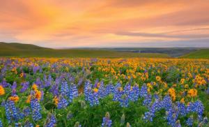 parque-nacional-del-valle-de-las-flores-india-keengoo