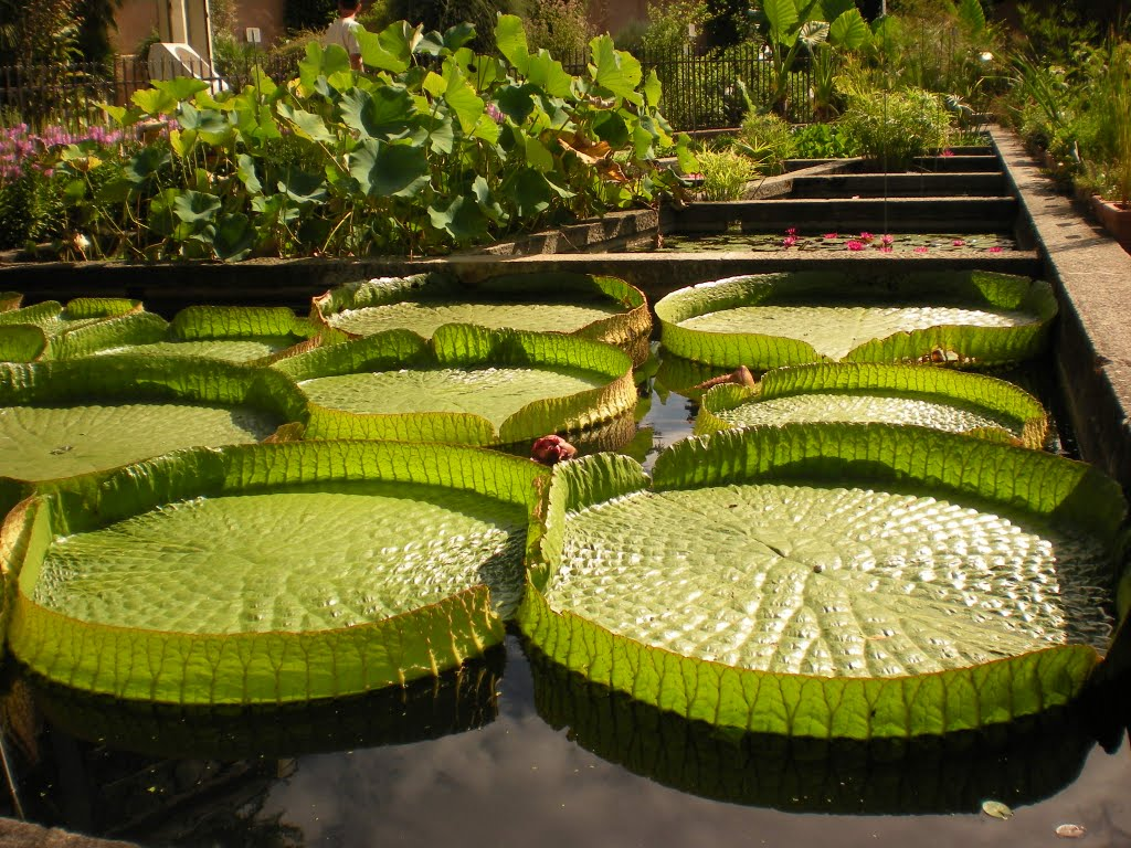 Jard n bot nico de padua orto botanico di padova for Jardin botanico 2016