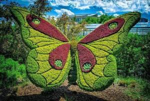 atlanta mariposa