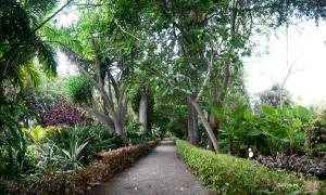 botanico_tenerife_6