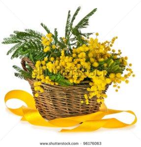 cesta mimbre mimosas